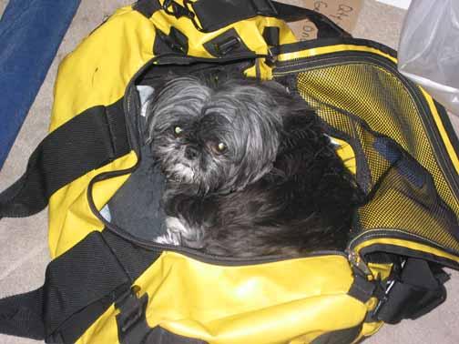 yoda in a bag